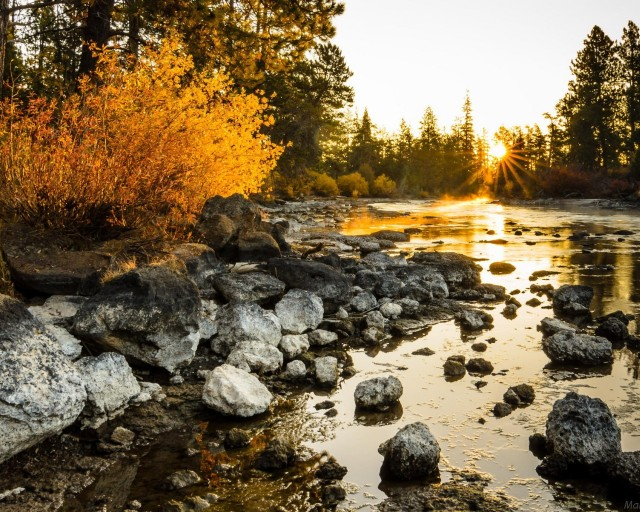 priroda-reka-utro-les