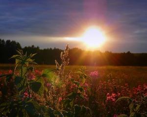 zakat-nebo-solnce-pole-cvety
